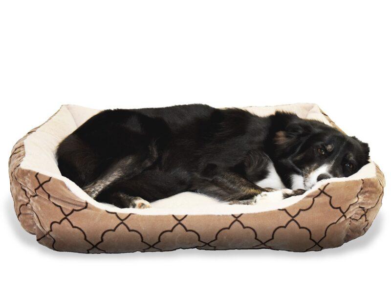 Bedre træning med bedre søvn for både dig og din hund