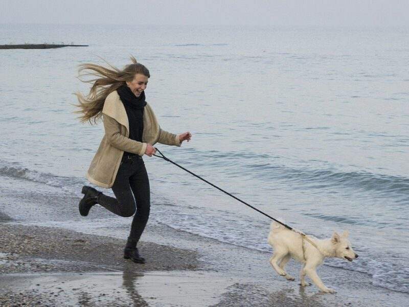 Bliv mere aktiv og sund med en hund